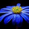 🇦🇷 Satélite Flor Azul